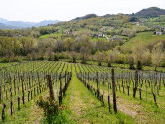 In copertina, Azienda vinicola Donnachiara, Montefalcione AV( crdit foto ASA Magazine / Carmen Guerriero)